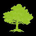 Tree_lime
